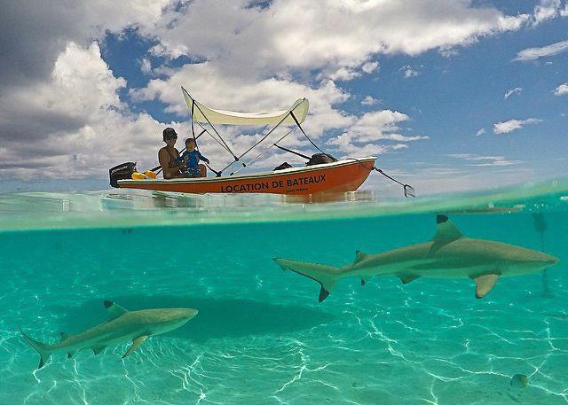 gopro under over water photo