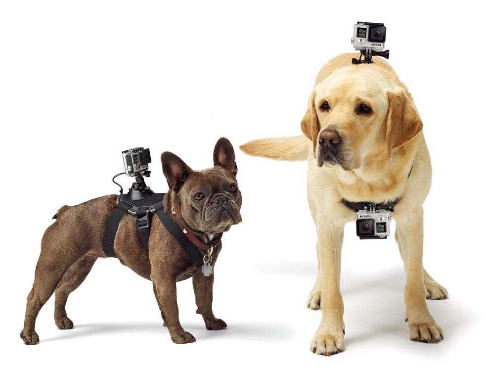 supporto per cani gopro